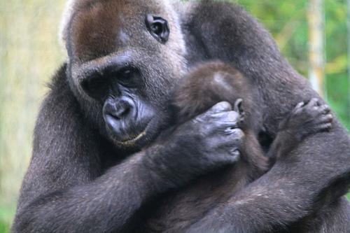 monkey-mom-baby