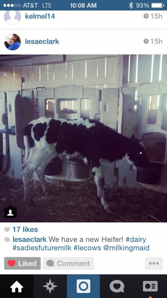 lesaclark-new-heifer-calf-instagram