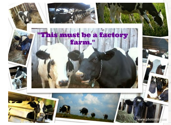 farm-life-the-udder-side