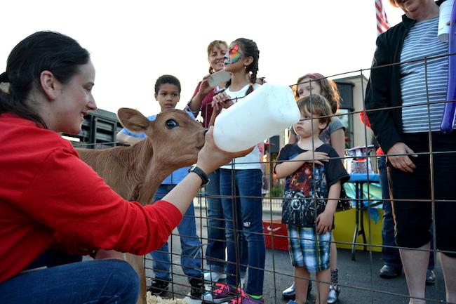 danielle-mzyk-feeding-calf