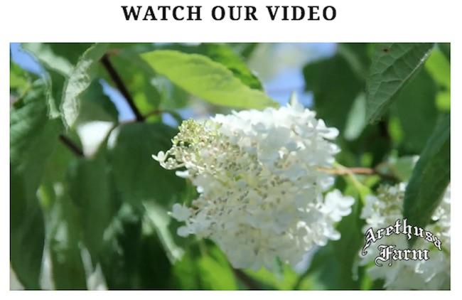 arethusa-video